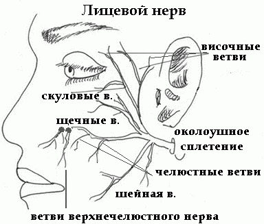 О лицевом и промежуточном